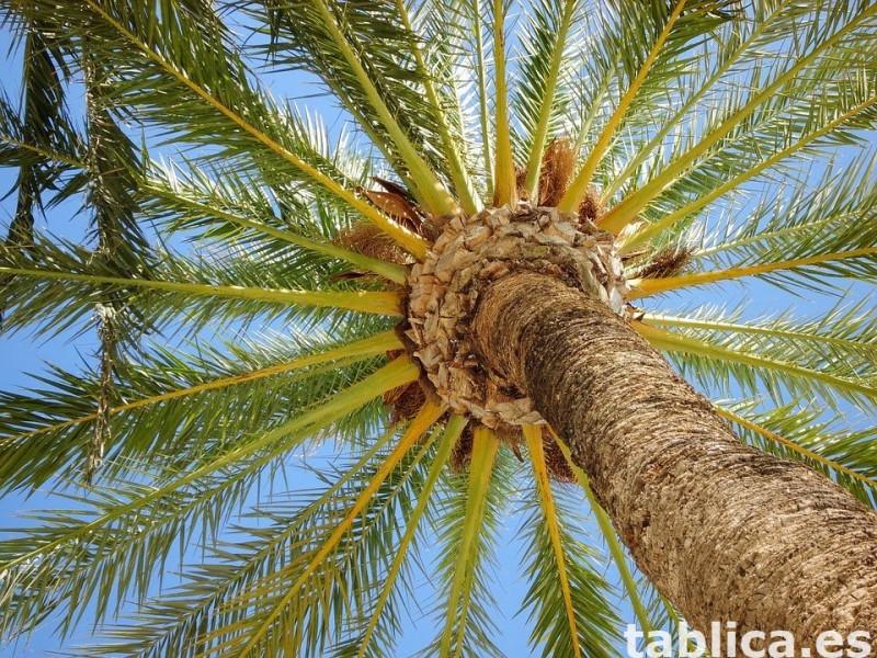 Wakacje pod słońcem – Costa Blanca, to California Europy... 6