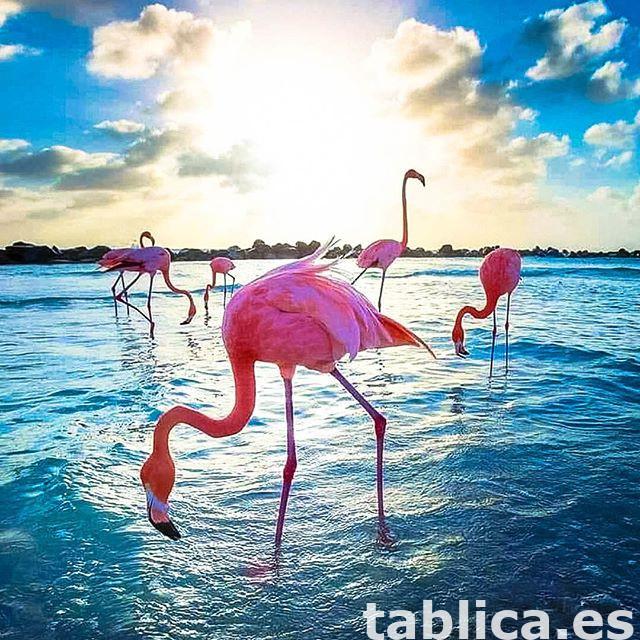 Uwaga! > Zimowanie w słonecznej Hiszpanii. 0